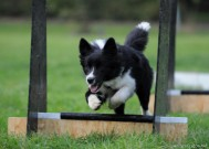 flyball 3.10.2011